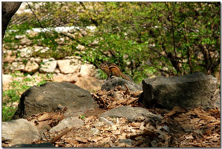 경선이가 찍은 다람쥐 사진